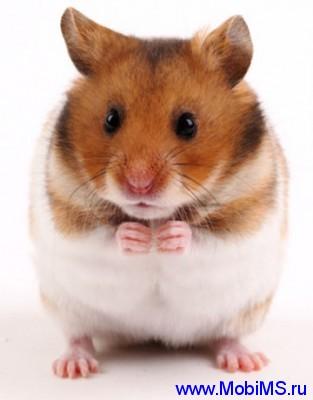 Приложение Talking Hamster  говорящий хомяк для Nokia Symbian 9.4 touch, ^3, Belle, Anna